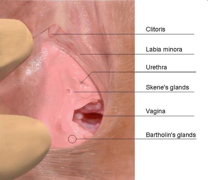 Techniques de stimulation du point G – Comment réussir avec l'éjaculation féminine
